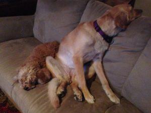 Thunder! Poppet and Nellie.