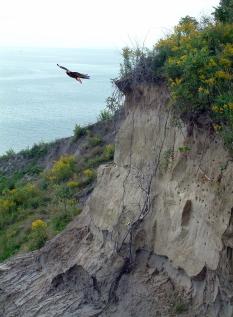 Hawk-Cliff.jpg